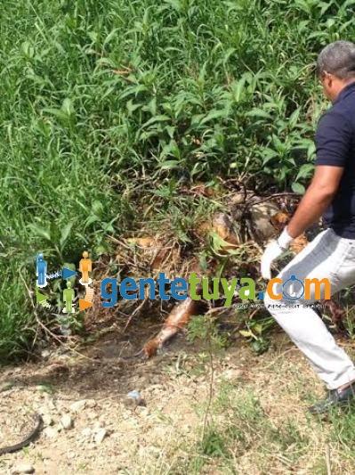 Haitiano muerto