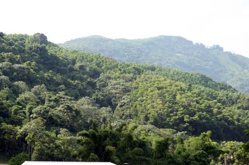 """El Conep llamó al Poder Ejecutivo a la """"prudencia y reflexión para evitar que se promulgue ley declara Loma MIranda parque nacional"""