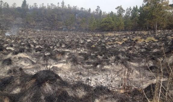 Critican donación de un aserradero a Ministerio de Medio Ambiente para aprovechar los árboles quemados durante el incendio que afectó Valle Nuevo